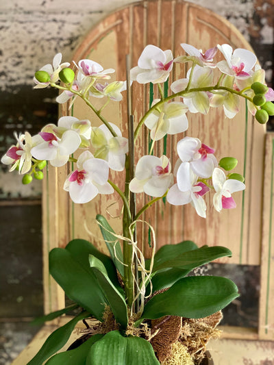 The Serena White Orchid Arrangement, Centerpiece for table, Natural style arrangement, coffee table centerpiece, office decor