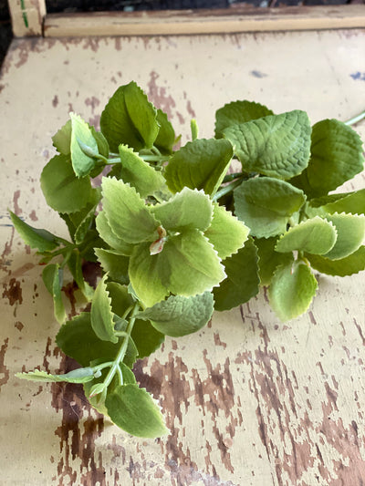 Faux Velvet Touch Mint Stem, Silk flower stem, artificial flower stem, craft supply, wedding flower, artificial greenery