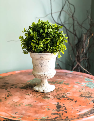 The Josephine Maiden Hair Fern Centerpiece