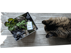 Hemp Oil for Cats (200mg CBD)