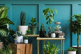 Tips for instant stress relief surround yourself with plants
