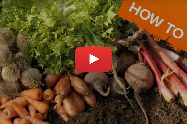 An introduction to growing your own fruit & veg