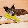 Mint Cactus Dog Toy
