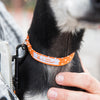 Tiny Dog Collar