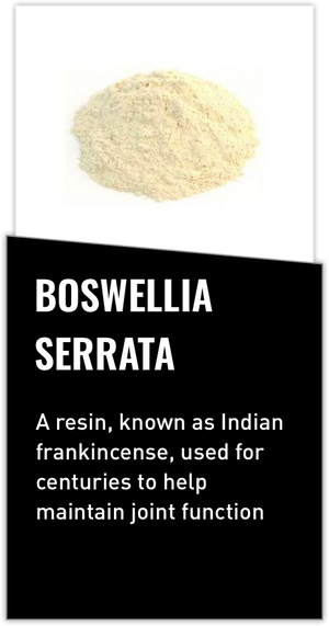 Mdrive ingredient Boswellia Serrata