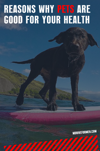 mdrive dog on surfboard how pets can help your health
