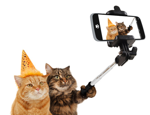 Cats taking a selfie