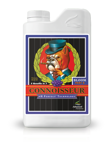 Connoisseur Bloom B