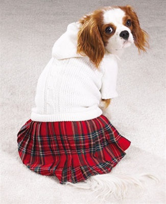 Back To School Pet Dog Jumper by Pet Edge