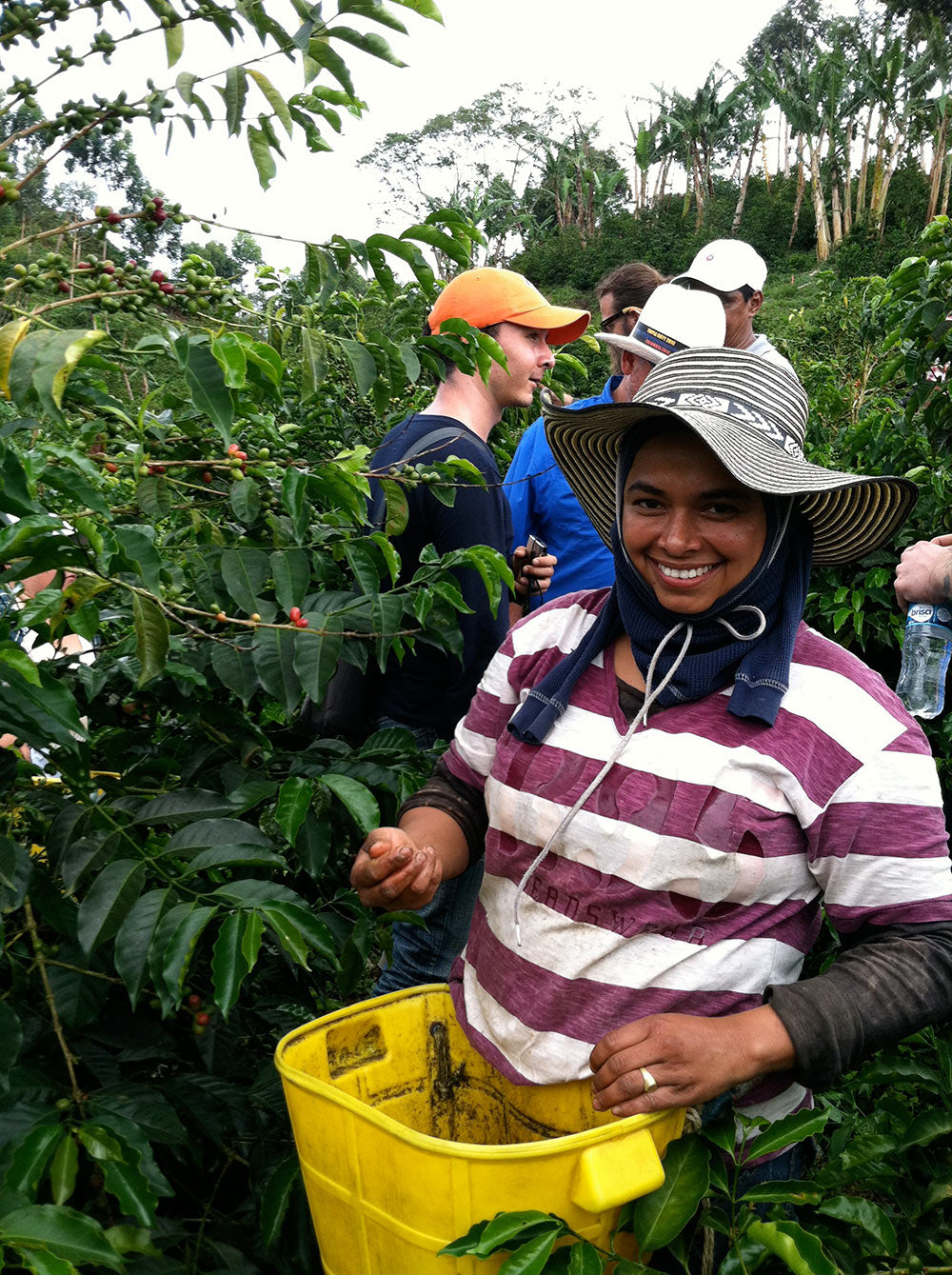 A coffee picker at Cerro Azul