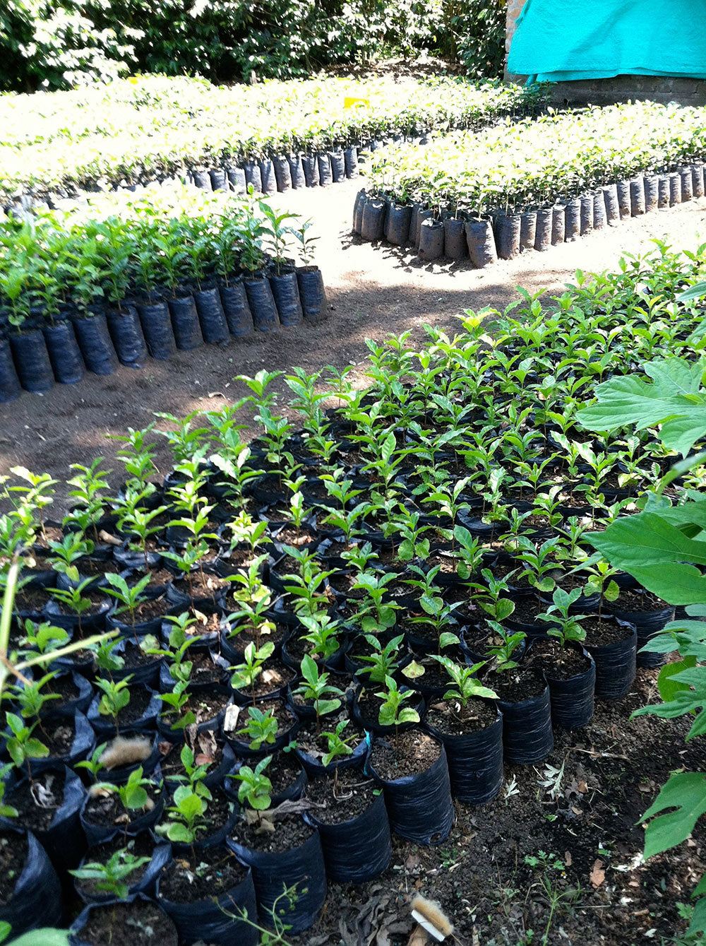 The nursery at Granja La Esperanza