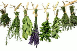 Herbs to help boost your immune system