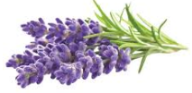 Surprising things about Lavender Essential Oil