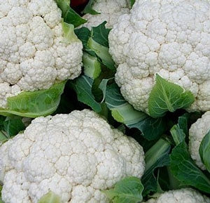 Cauliflower Snow Crown