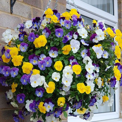 Pansy Cool Wave Mixture