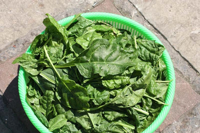 Imperial Green Spinach