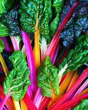 Swiss Chard Bright Lights