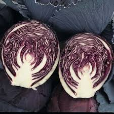 Cabbage Ruby Ball