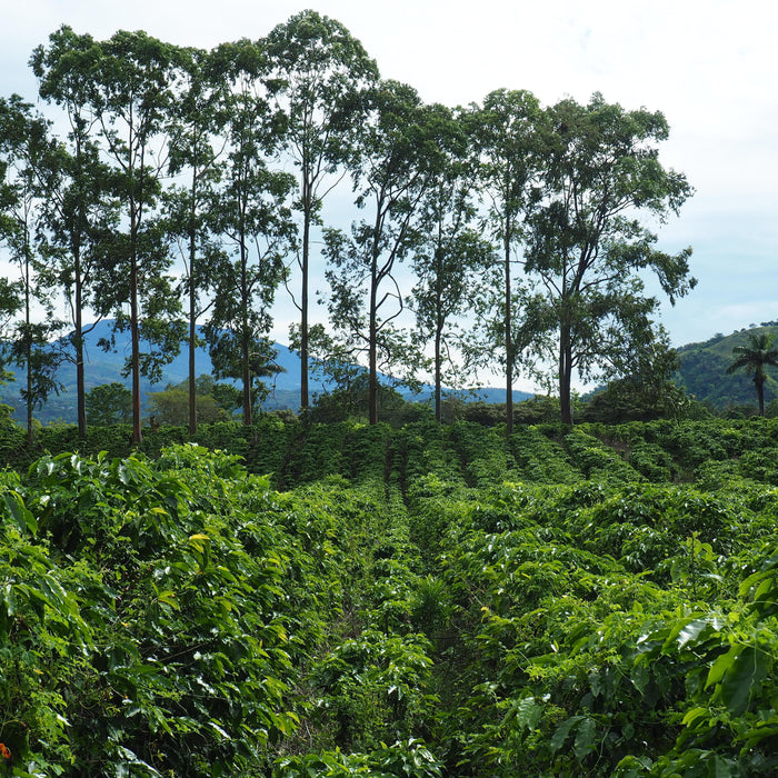 Central America Coffee Tour