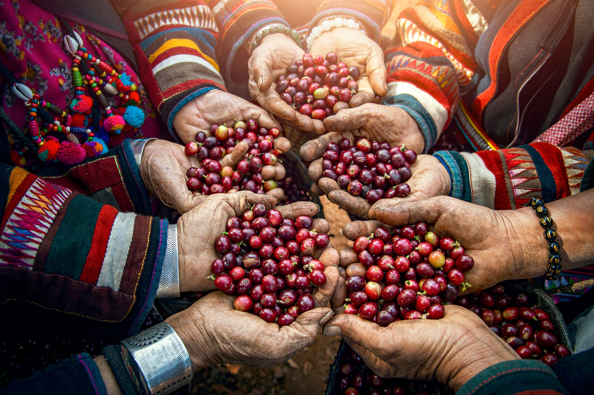 direct-trade and micro-lot coffees