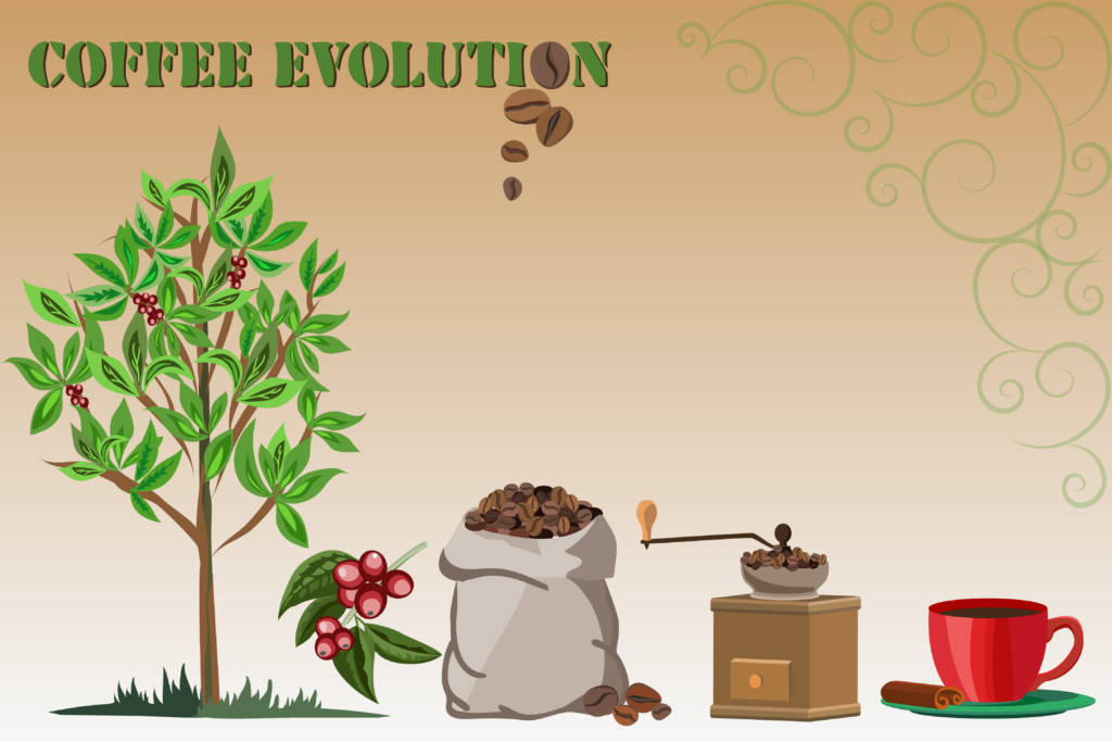 life cycle of a coffee bean