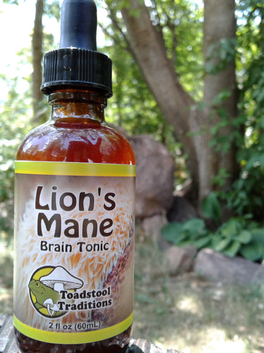 Lion's Mane Brain Tonic