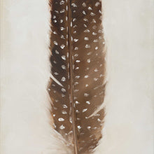 Feather: Brown Guinea