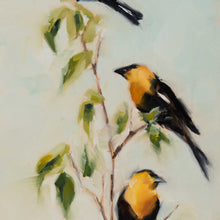 Yellow Headed Blackbirds