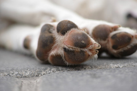 Dog paws. Article by Pulvis Art Urns on Pet cremation