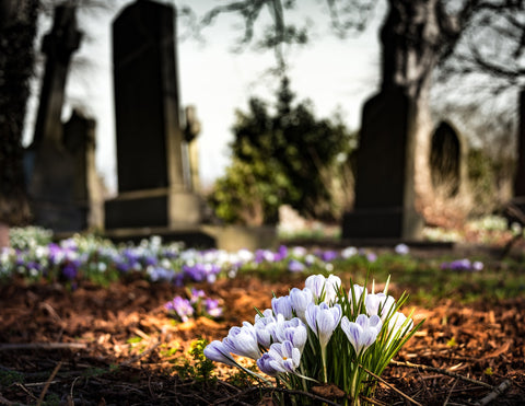 Cemetery photo. Article by Pulvis Art Urns