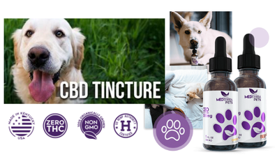 CBD for Your Pets