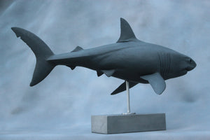 Keith Calder:  White Shark
