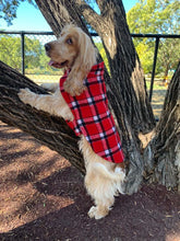 Load image into Gallery viewer, Morty is wearing his 90% wool dog coat. keeping warm and cosy in the cold winter temperatures. Featuring blanket style wool in red check and lined with 100% cotton.