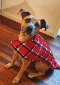 Harley is wearing her 90% wool dog coat. keeping warm and cosy in the cold winter temperatures. Featuring blanket style wool in red check and lined with 100% cotton.