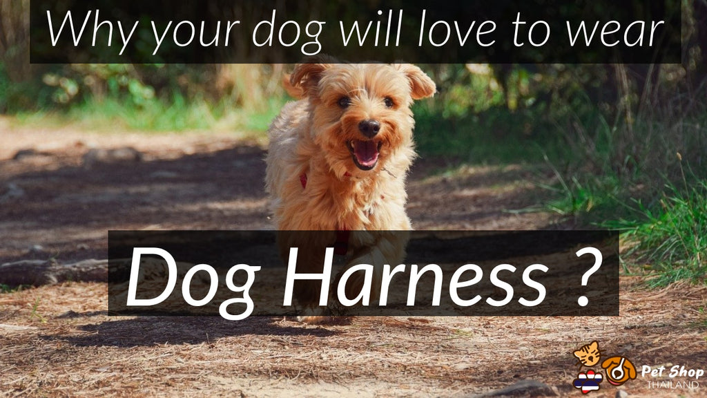 Why your dog will love to wear Dog Harness ?