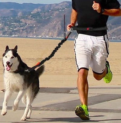 Flexible Running Dog Leash - Pet Shop Thailand