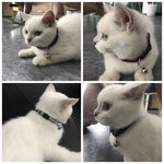 Breakaway Cat Collar - Pet Shop Thailand