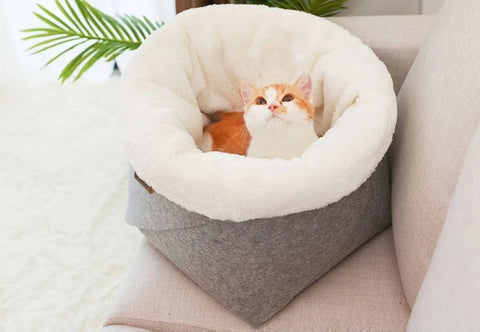 Cat Cotton Bed - Pet Shop Thailand