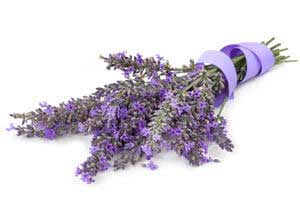 Lavendula oil for baby care products