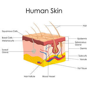 the layers of skin and function
