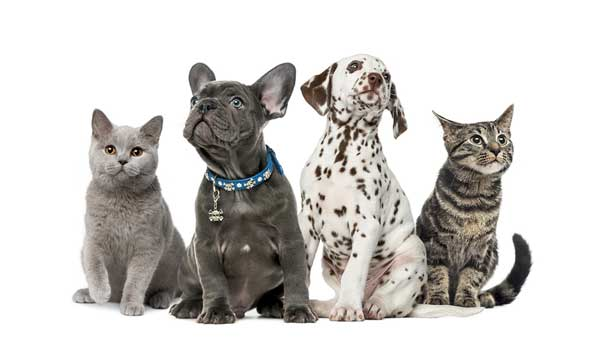 Cute Kittens and Puppies with Momma Cat