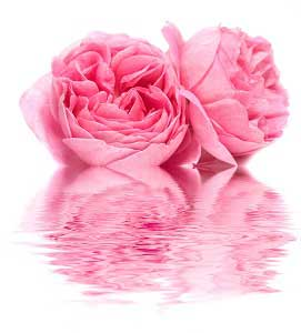 Fresh Rose Seven Signs of Aging