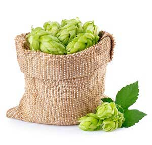 Hops in Anti-aging Facial Products and Cosmetics