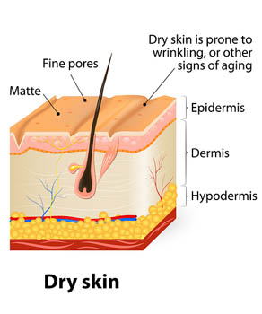 Dry and Mature Skin with Signs of Aging