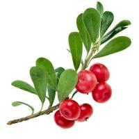 Plant, Fruit, Branch, Natural foods, Twig, Berry, Seedless fruit, Ingredient, Produce, Superfood