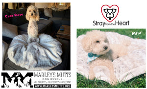 Marley's Mutts and Stray from the Heart, featuring Cora Rose and Milo of Puerto Rico