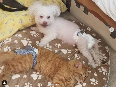 Dharma Rescue Disabled Dog and Cat