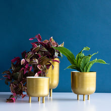 Load image into Gallery viewer, Modern Brass Planters