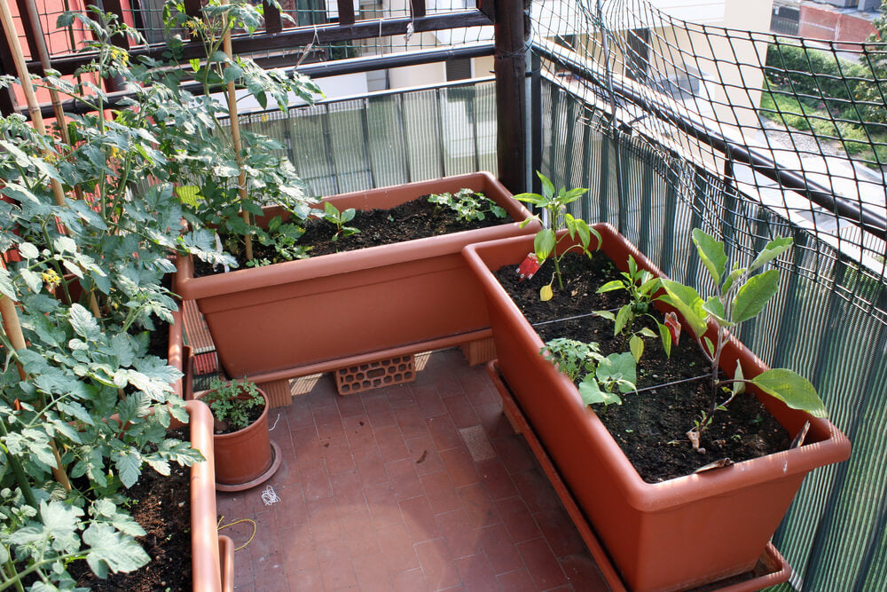 staying green at home growing vegetables