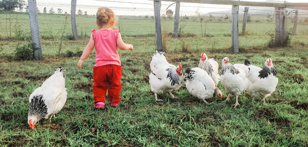 Child playing with pet chickens